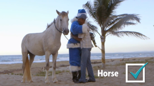 westjet-christmas-dominican_horse